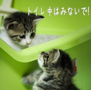 猫もトイレ中は見られたくない
