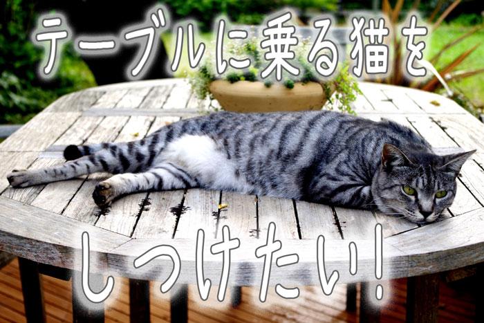 テーブルに乗る猫をしつけたい