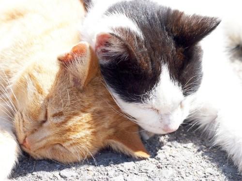 猫のオスとメスの性格