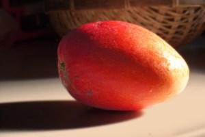 アップルマンゴーと黄色いマンゴーの違いアップルマンゴー横