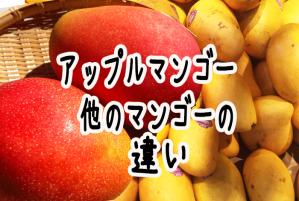 アップルマンゴーと黄色いマンゴーの違いtop