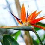 勤労感謝の日11月23日の花と記念日