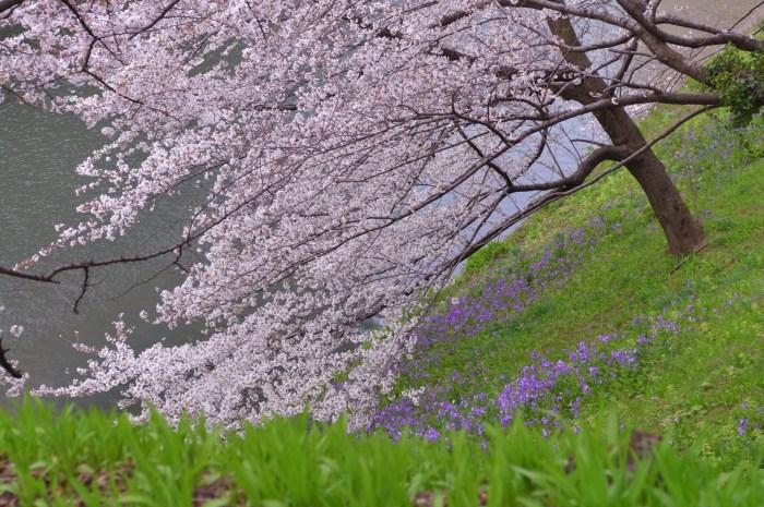 春の雑草の花の名前