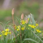 花壇のスギナを駆除しよう除草剤で枯らすなら子供にも安全なものを