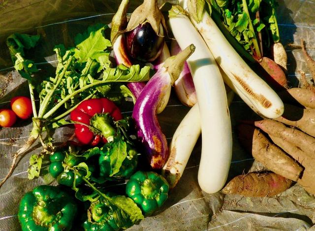 家庭菜園8月の作業