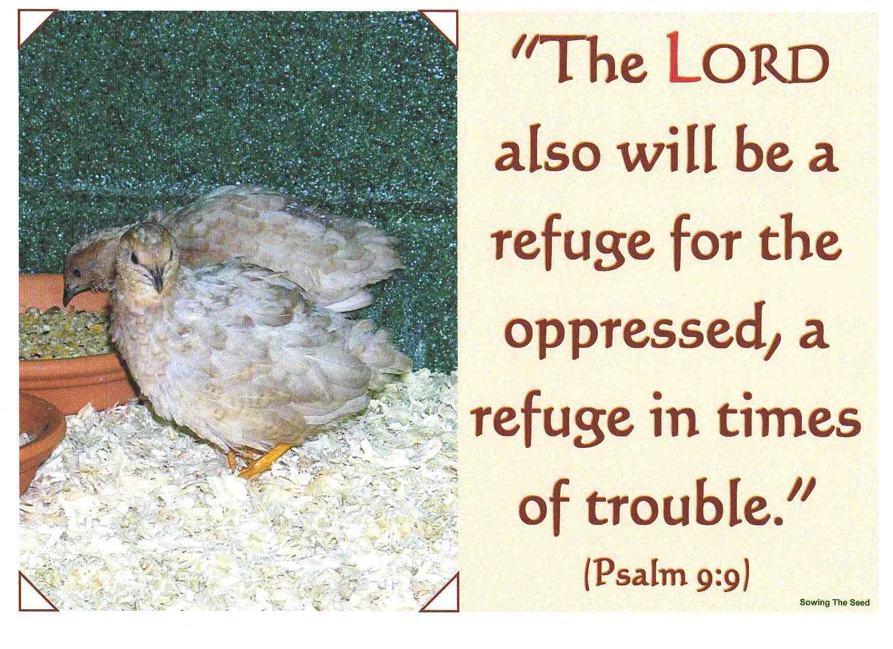 A Refuge