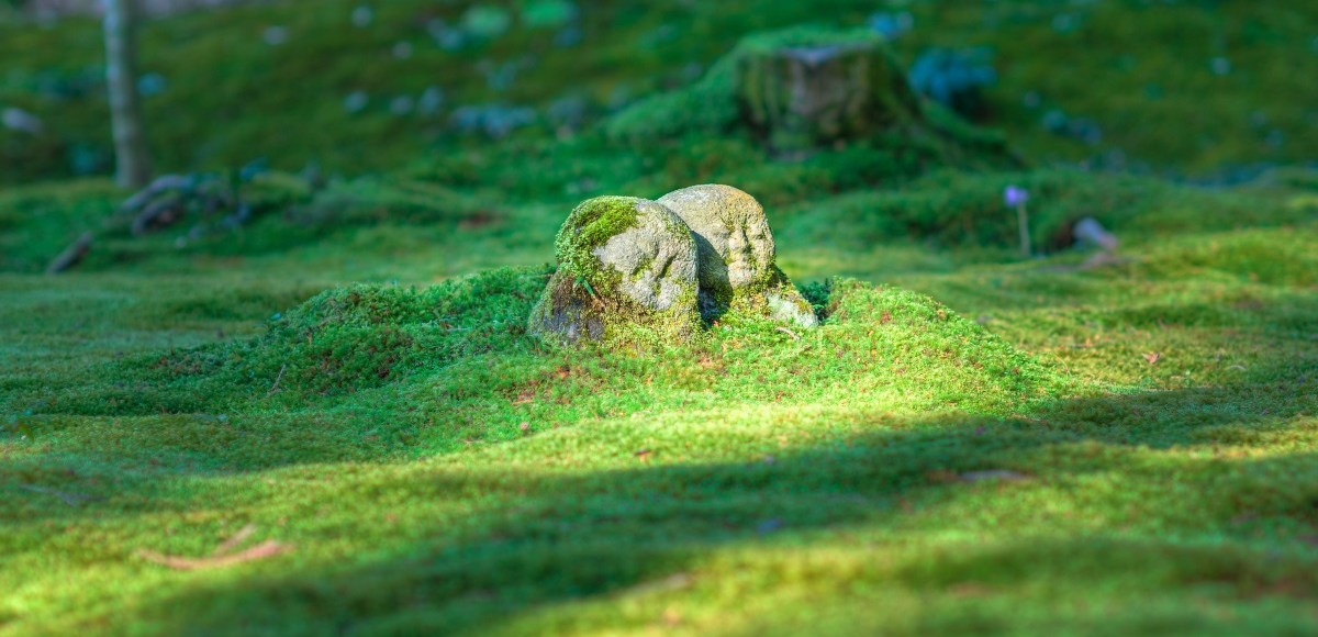 Buddha coveredby nature