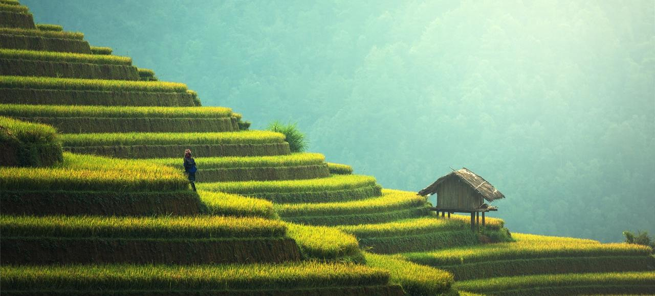 Beautiful picture of a paddy field