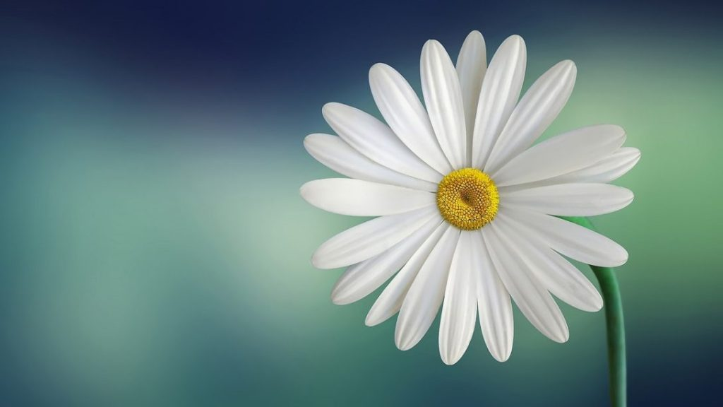 A wonderful flower