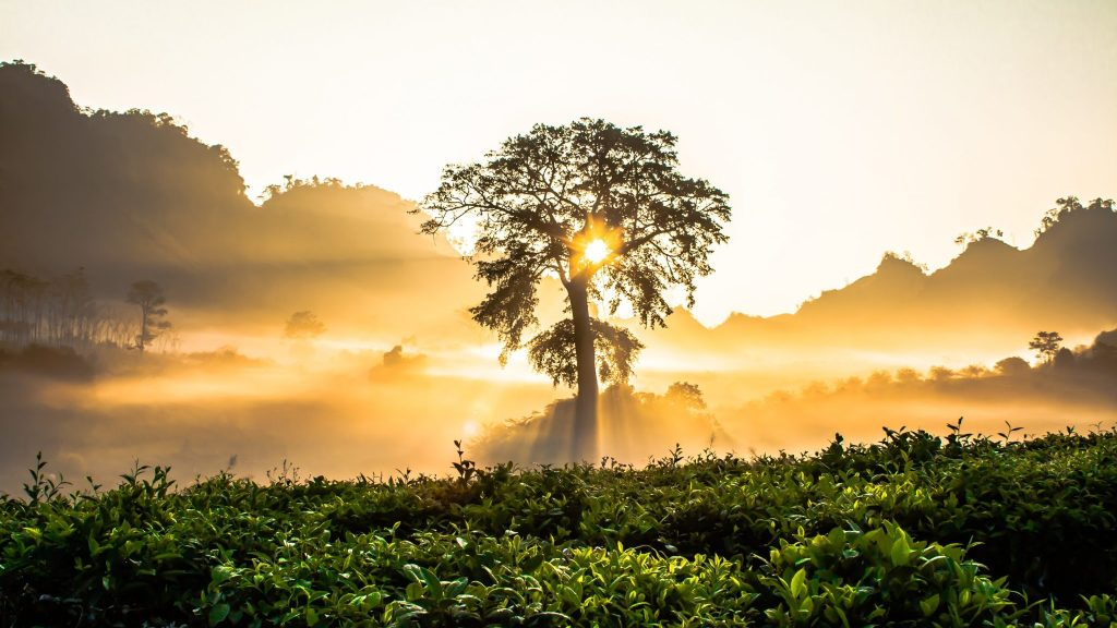 The spectacle of cosmic elegance