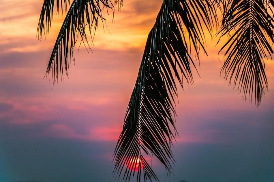 Sunset with palm tree.jpg