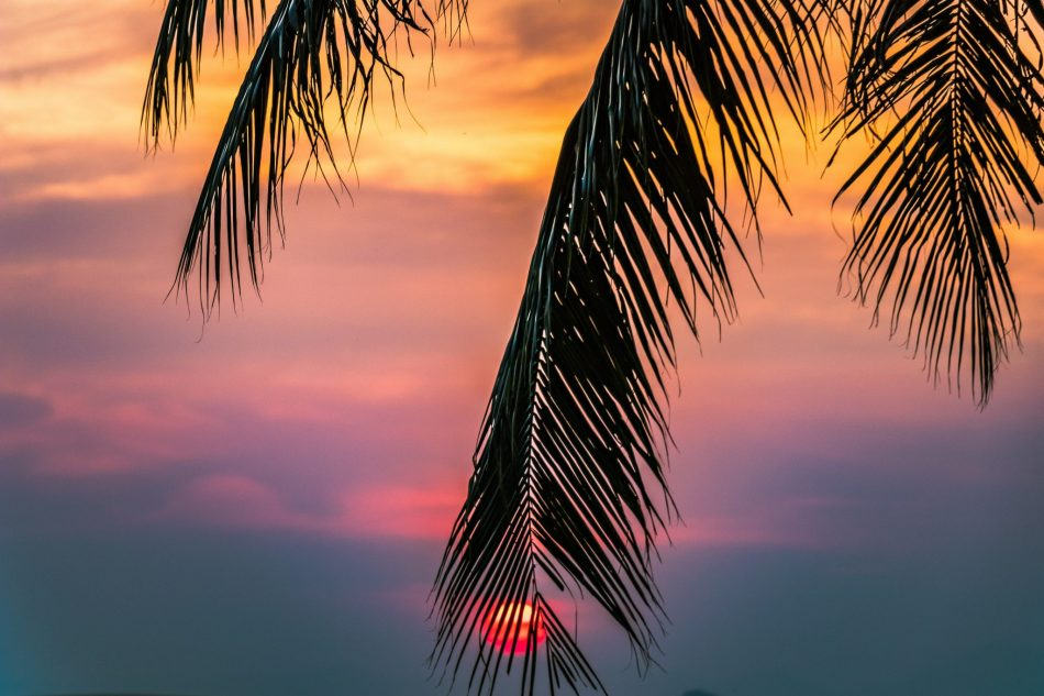 Sunset with palm tree.jpg
