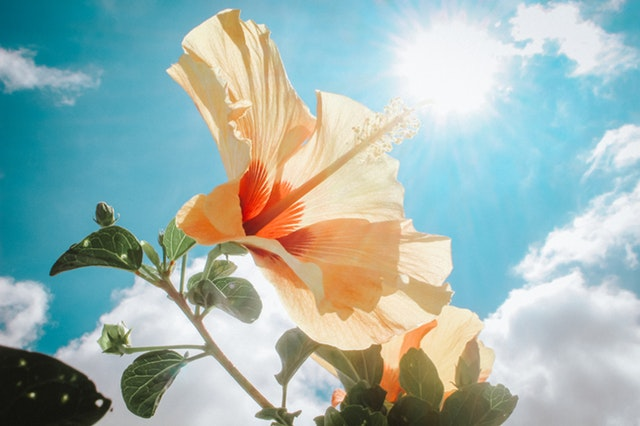 Powerful sunlight
