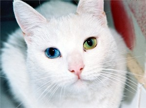 cat-518306_1280