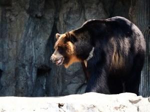 bear-495001_1280