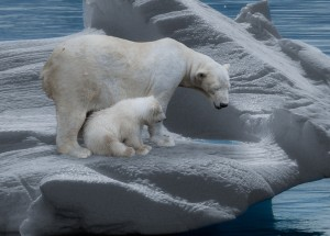 polar-bear-709682_1920