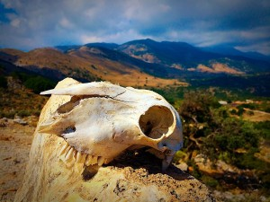 skull-553198_1280