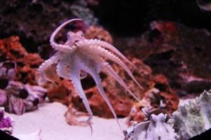 octopus-259740_640