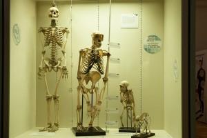 skeleton-414543_640