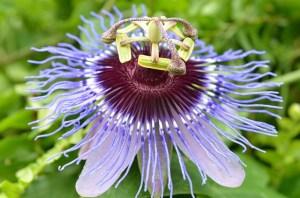 flower-54743_640