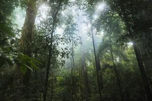jungle-601542_640