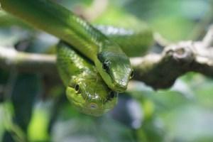 snake-921686_640