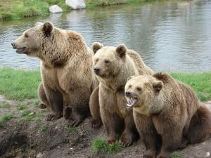 bear-1206881_640