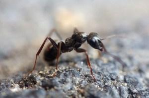 ant-1350089_640