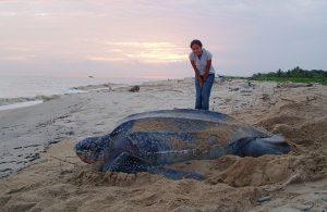 leatherback_beach