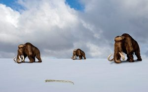 mammoths_2569190k
