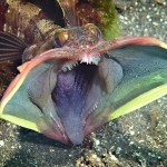 エイリアンフィッシュの顔がヤバイw【動画】どんな生態の魚なのか!?