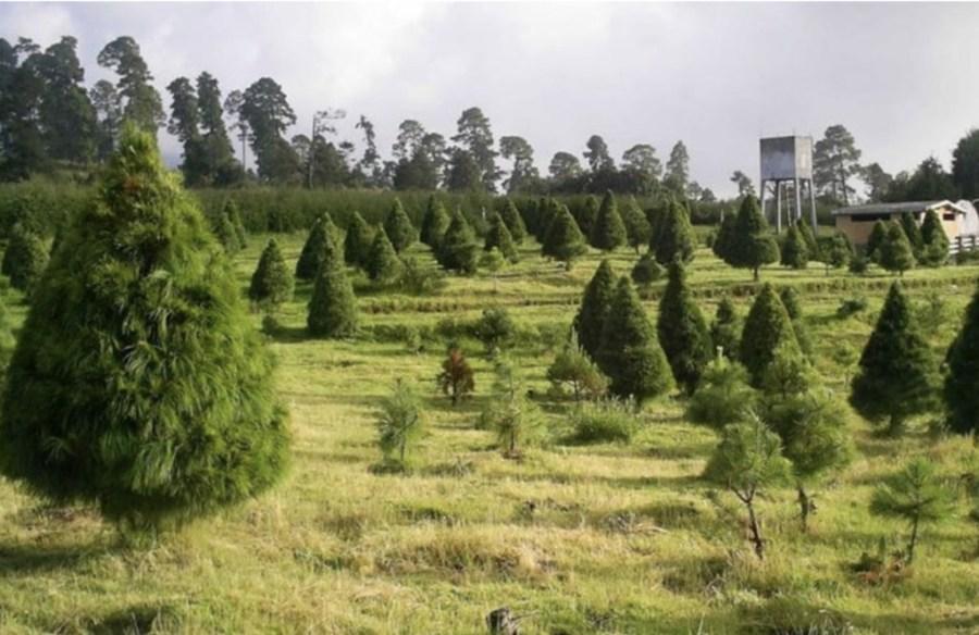 Eco Parque San Pedro