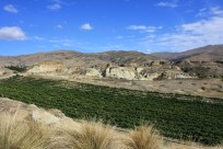 Vineyards of Mt Difficulty in the Bannockburn desert