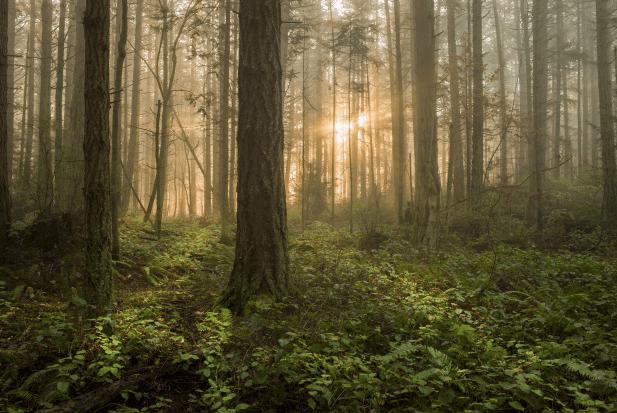 Video: ¿Por qué parece que este bosque respira?