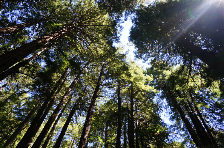 SF Muir Woods Park