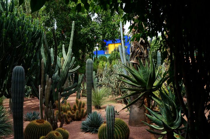 Jardins Majorelle Yves Saint Laurent Maroc