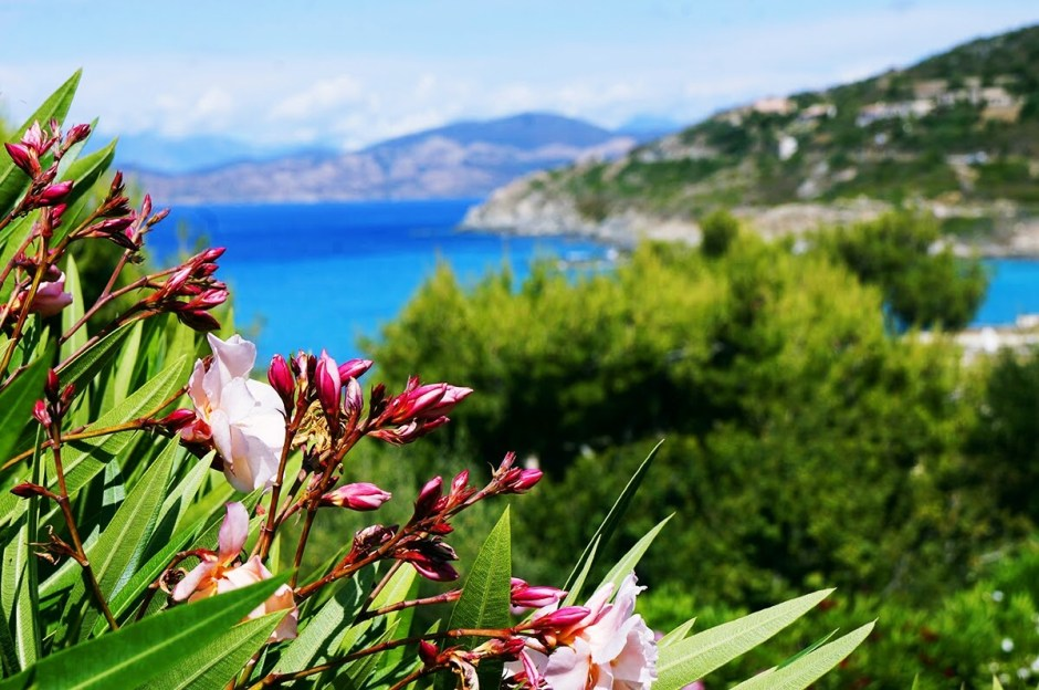 corse ile rousse vacances 2016 fleurs fuschia
