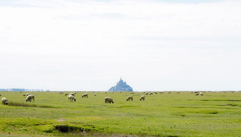 Mont Saint Michel grande maree mere poulard avis sejour vue moutons pre-sale