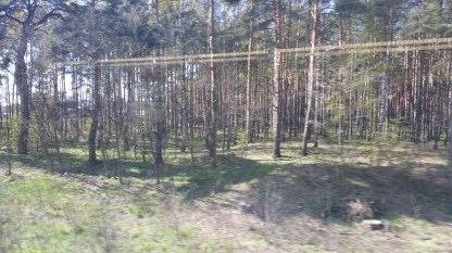 Trees near track to Bialystok