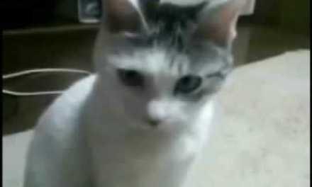 NSFW: El gato que no puede soportar tanto horror