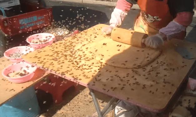 OMG: Miles de abejas invaden un puesto callejero