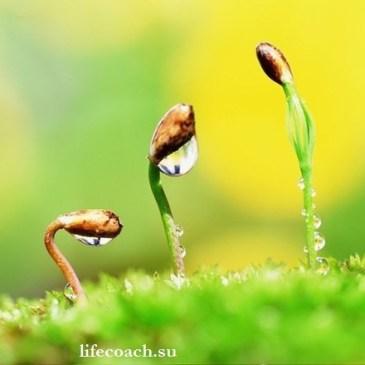 La Vida es como un Cuentagotas