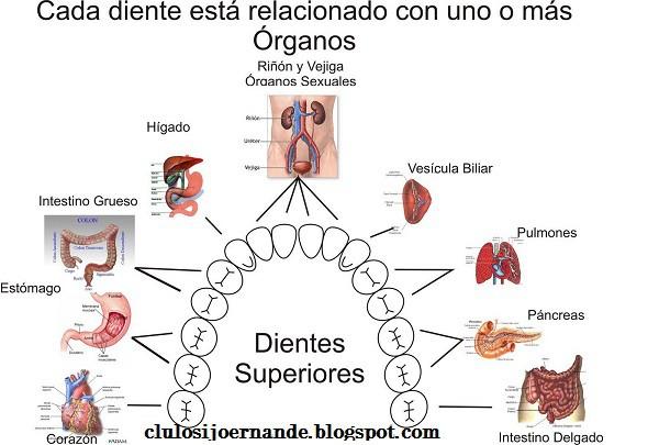"""""""Bioneuroemoción y Salud bucal o Reflexología dental"""""""