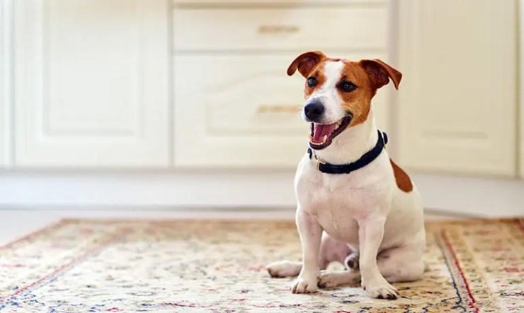 perro-sentado-en-el-wc-esperandome