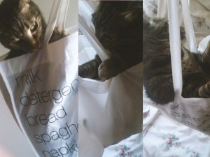 soyvirgo's cat
