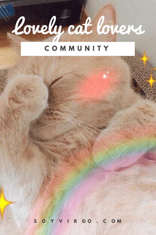 lovelycatlovers community