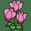 植物 シクラメン(ピンク色)(カラー)