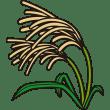 植物 ススキ(カラー)