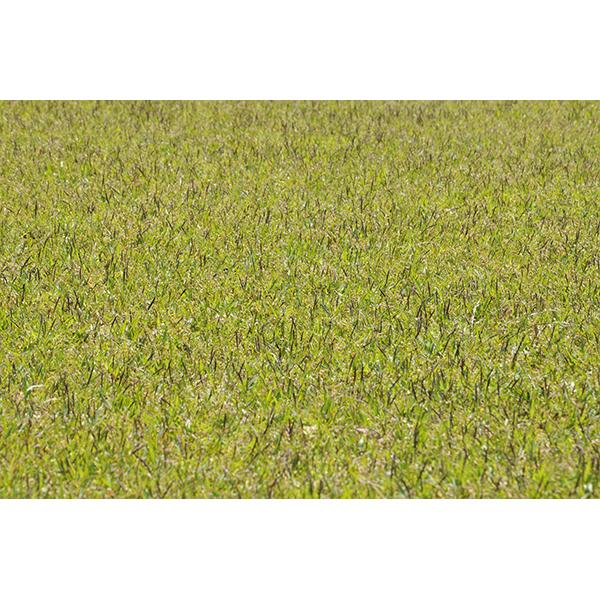 背景画像 芝生のテクスチャ(淡め)(カラー)