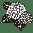 植物 あじさい(モノクロ)